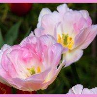 flowers :: Jerzy Hermanowicz