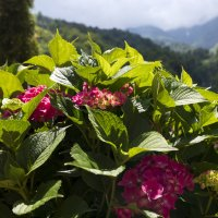 Цветы и горы :: Леонид