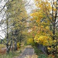 Прогулка с собакой в осеннем лесопарке :: Елена Павлова (Смолова)
