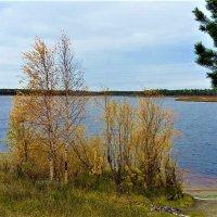 У озера :: Алла ZALLA
