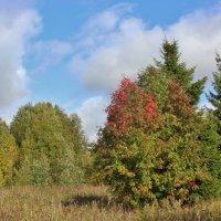 Вновь осень наступает в сентябре... :: Галина .