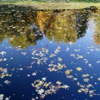 Осеннее отражение :: Елена Кирьянова