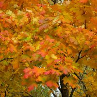 Осенний калейдоскоп :: Ольга Довженко