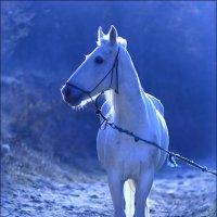 Лошадь в голубом :: Анатолий Винник