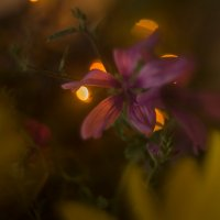 Цветы :: Виктор Мороз