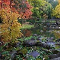 Осень в японском саду. :: Николай Кондаков