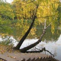 Осенний парк :: Хвостища