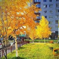 Деревья в осеннем золоте :: Алла ZALLA