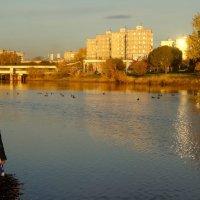 Река Тагил в лучах заходящего солнца. :: Елизавета Успенская