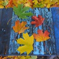Великие Луки, осень, кленовые листья... :: Владимир Павлов