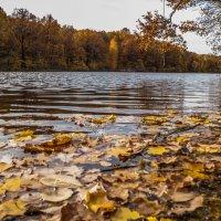Осеннее озеро :: Виктор