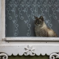Кошка в окошке. :: Владимир Безбородов
