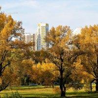 Город в золоте осеннем :: Василий