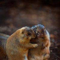 Это любовь :: David Lerer