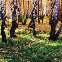 Золотая осень :: раиса Орловская