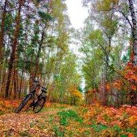 Осенний этюд :: Валерьян
