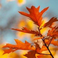 Осень—рыжая девчонка Шьёт наряды тонко-тонко: Красные, бордовые, желтые листки— Это лоскутки... :: azart_007