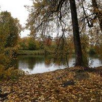 Осенний день :: ZNatasha -