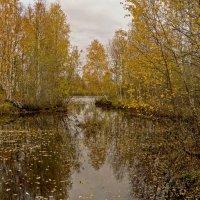 Золотая осень :: Svetlana Pavlovskaya