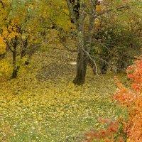 Осень смеется над... :: Юрий Куликов
