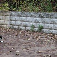 маленький охотник :: Олег
