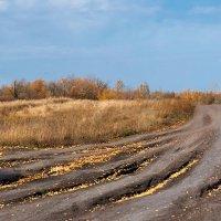 Золотые дороги осени :: Инна Драбкина