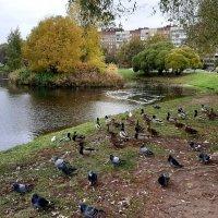 В парке Малиновка :: Елена Павлова (Смолова)