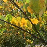 Осень :: Надежда