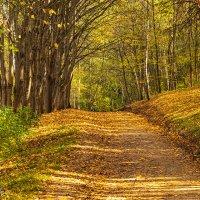 Осенний лес :: Олег Соболев
