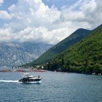 Montenegro :: Anna Owl