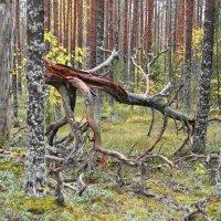 словно огромный олень склонил голову и сбросил рога :: Михаил Жуковский
