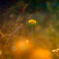 Цветочек :: Виктор Мороз