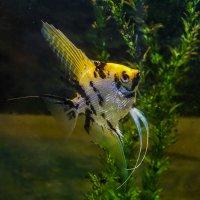 Рыбка :: Владимир Орлов
