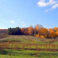 С Днём засыпающих деревьев! :: Андрей Заломленков