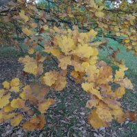 Осень :: Наташа