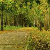 Осенняя дорожка. :: AVI