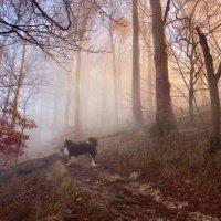 заблудился хозяин в тумане :: Elena Wymann