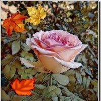 Осенняя роза :: Наталья Цыганова