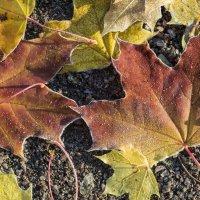 Осенний ковёр под моими ногами... :: Александр Петров