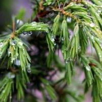 В Трускавце дождь.... :: Татьяна Ларионова