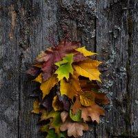 Отрывной календарь Осени :: Сергей Мартьяхин