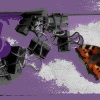 натюрморт с мёртвой бабочкой :: Павел Самарович