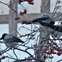 Покормите птиц зимой! :: Венера Чуйкова
