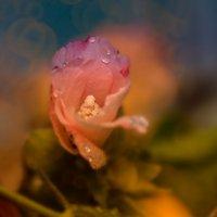 Цветок :: Виктор Мороз