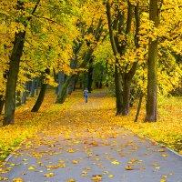 По ковру из желтых листьев ... :: Виталий Латышонок