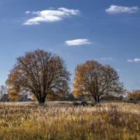 Осень рядом со Свенским монастырём :: Евгений
