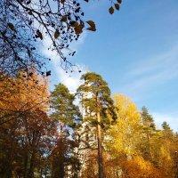 Осенний пейзаж :: Aнна Зарубина