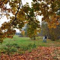 Осенняя прогулка :: Нина Синица