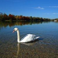Осень...осень... :: Galina Dzubina