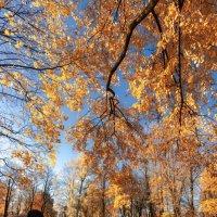 Осенний парк :: Илья